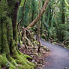 Ancient Rainforest - Springbrook, Australia by GypsySoulImages