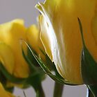 Yellow Rose Series - 1 by ctheworld