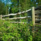 Country Fence ...Summer Style by peaceofthenorth