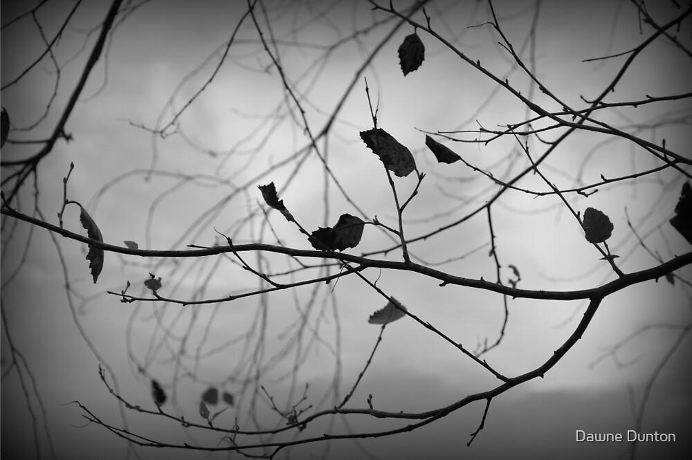 Autumn 2 in Black & White by ©Dawne M. Dunton