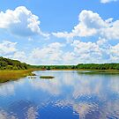 Huntington Beach State Park Brightened by ©Dawne M. Dunton