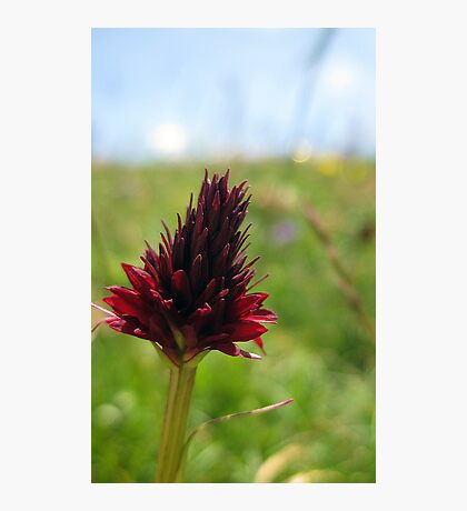 Mountain flower Photographic Print