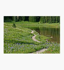 A pathway to paradise (Tipsoo Lake) Photographic Print