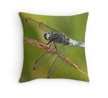 Male Scarce Chaser Throw Pillow