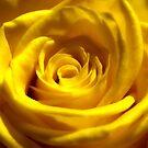 Yellow Dream 4 by hurmerinta