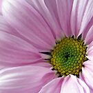 Pink Flower Macro Beauty by hurmerinta