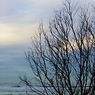 Winter and The Sea by lilybellspics