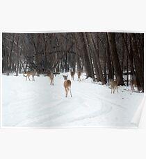 Gang of deer Poster