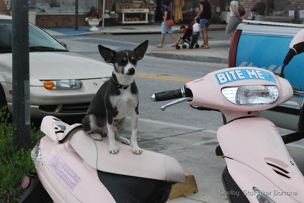 Puppy Moped  by Shelby  Stalnaker Bortone