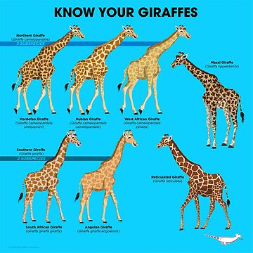 Know Your Giraffes by PepomintNarwhal
