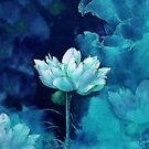 Moonlight Water Lily Blossom by JMarielle