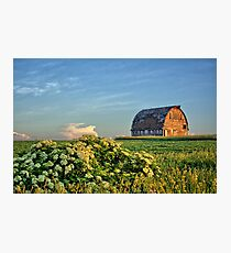 Elderberries And Old Barns Photographic Print