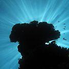 Light Beams III by Reef Ecoimages