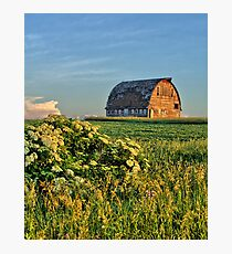 Elderberries And Old Barns No 2 Photographic Print