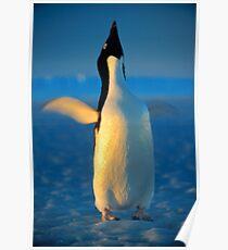 Ecstatic Dance, Antarctica Poster