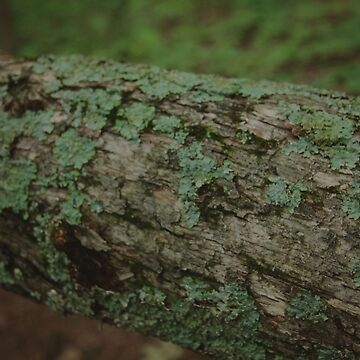 Moss by pinkangel840