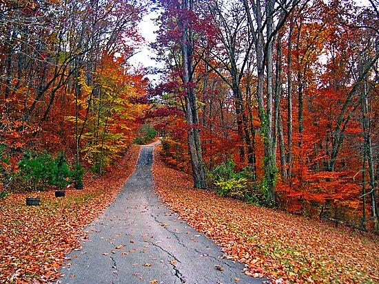 *MY FAVORITE COUNTRY ROAD* by Van Coleman