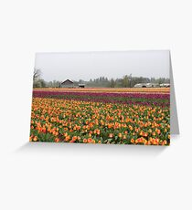 rows of color Greeting Card
