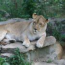 zoo life by natnvinmom