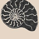 Ammonite with pattern... by Nuh Sarche