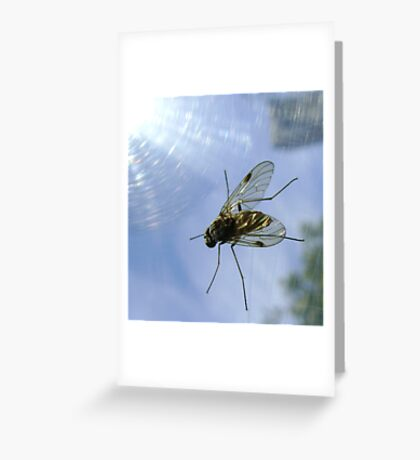 fly, reflecting Greeting Card