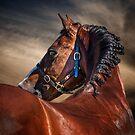 Red Stallion by carol brandt