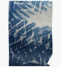 Fern Cyanotype Poster