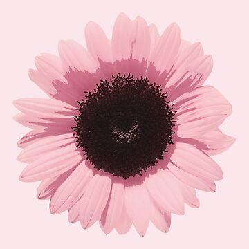 Rosa Sonnenblume von sim-kore