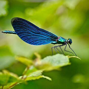 Neuroptera by sunilbhar