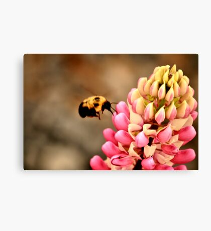 Big Landing Canvas Print