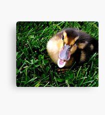 "You ""Quack"" me up! Canvas Print"