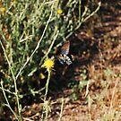 Blue butterfly by BellaStarr