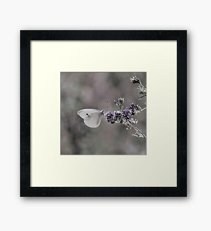 Cabbage White Butterfly II Framed Print