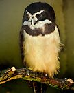 Owl, London Zoo by LudaNayvelt