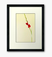 Red Gladiolus Spike Framed Print