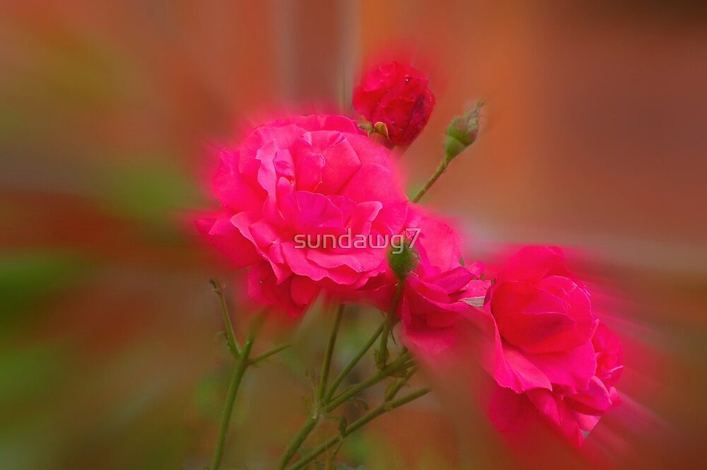 Mystic Roses by sundawg7