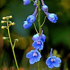Blue Delphinium by T.J. Martin