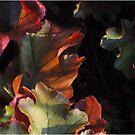 Autumn glow by Heather Thorsen