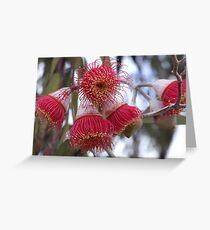 Eucalyptus Flowers Greeting Card
