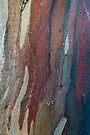 Bark 3 by Werner Padarin