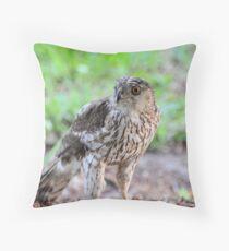 Broad-Winged Hawk 2 Throw Pillow