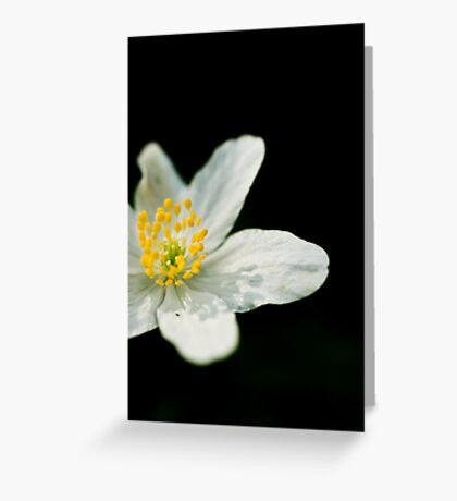 Anemone nemorosa Greeting Card