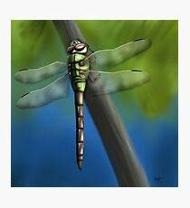 Green Darner Dragonfly Photographic Print