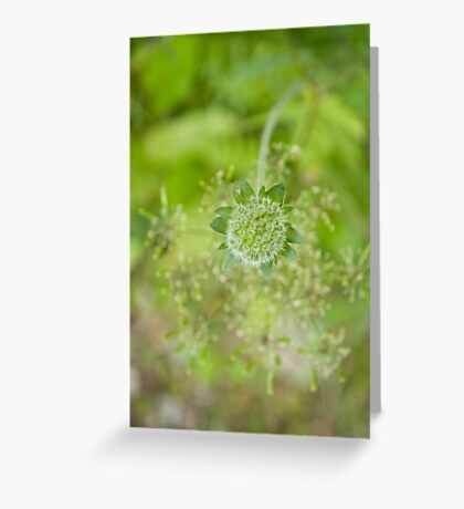 Greener Greeting Card