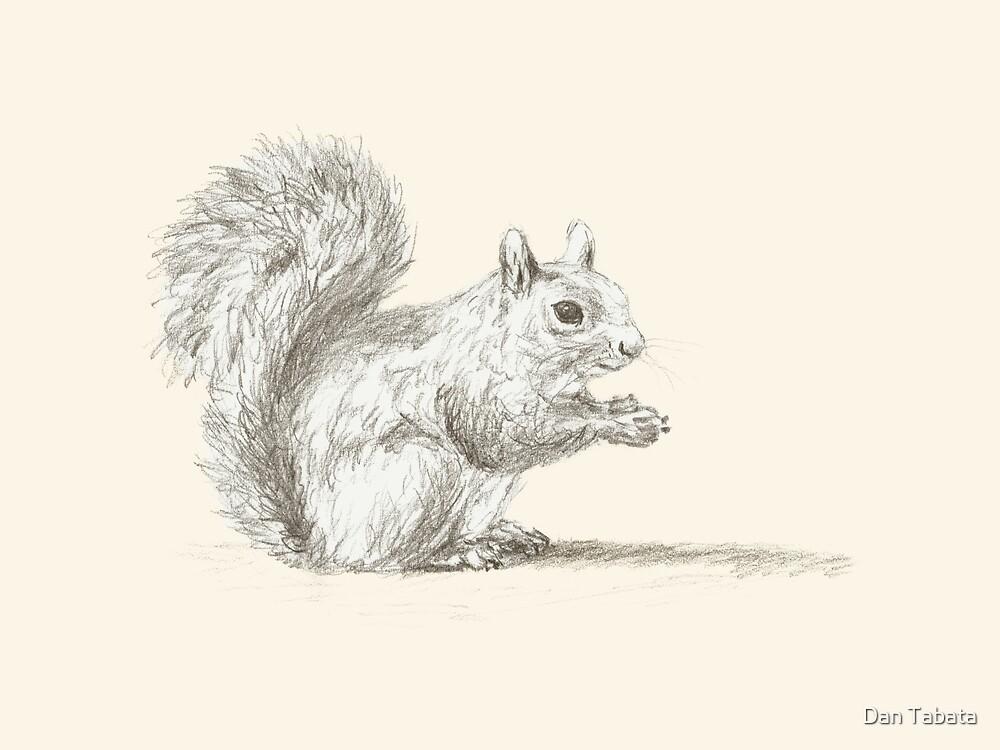 Resting Squirrel by Dan Tabata