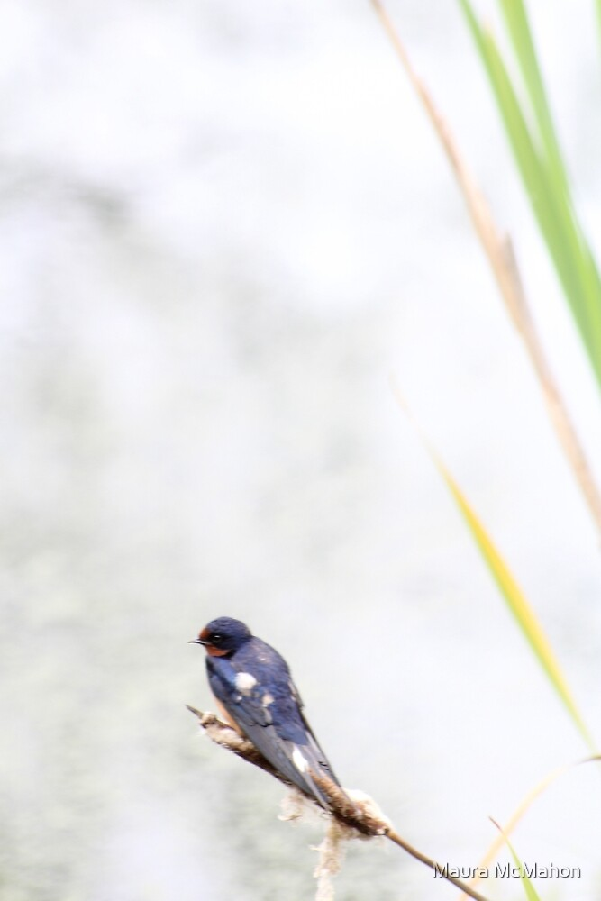 Swallow on a Cattail by Maura McMahon