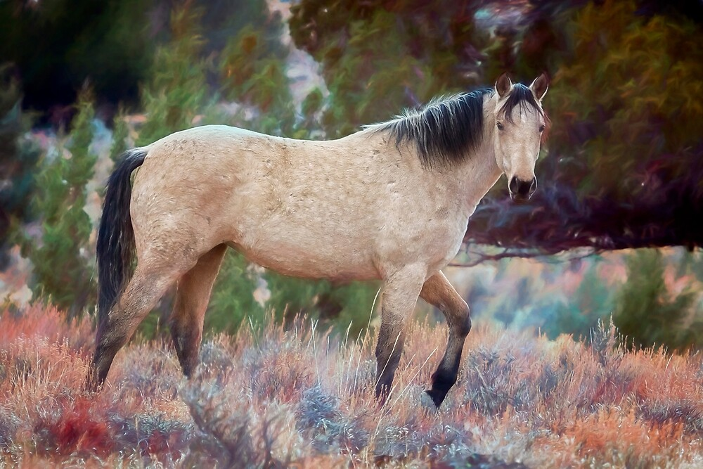 Beautiful Buckskin by BelindaGreb