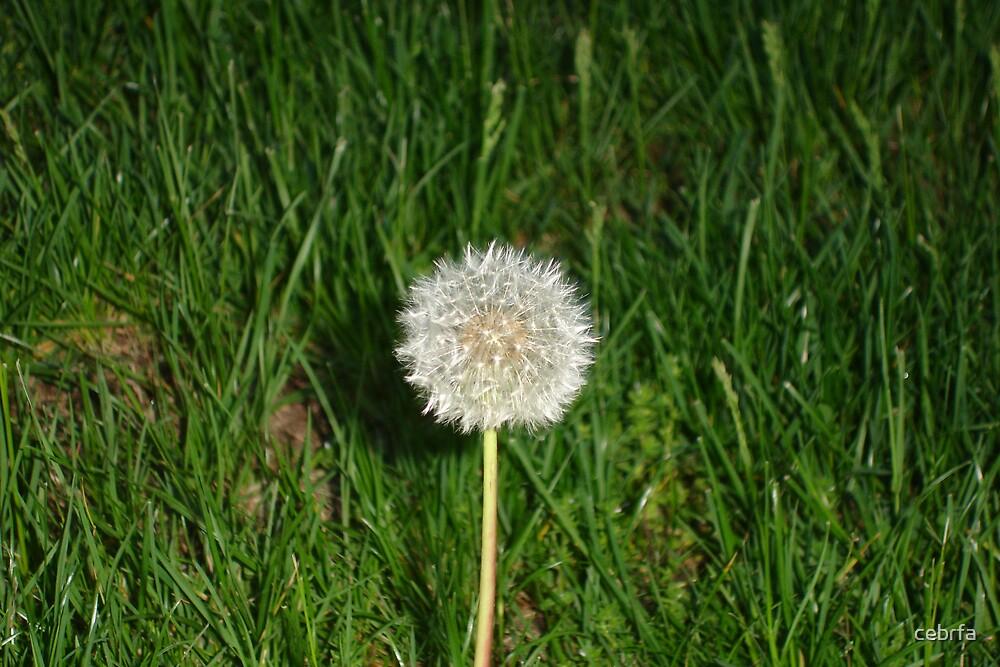 Wishes by cebrfa