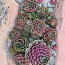 River of Succulents by brusling