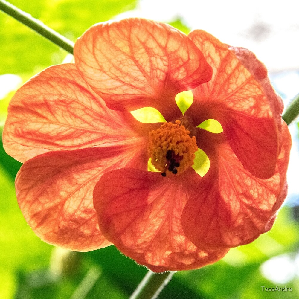 orange flower by TessAndre